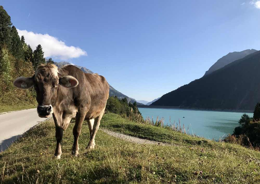 Bei der Wanderung mit Kinderwagen kommst du im Sommer auch an Kühen vorbei