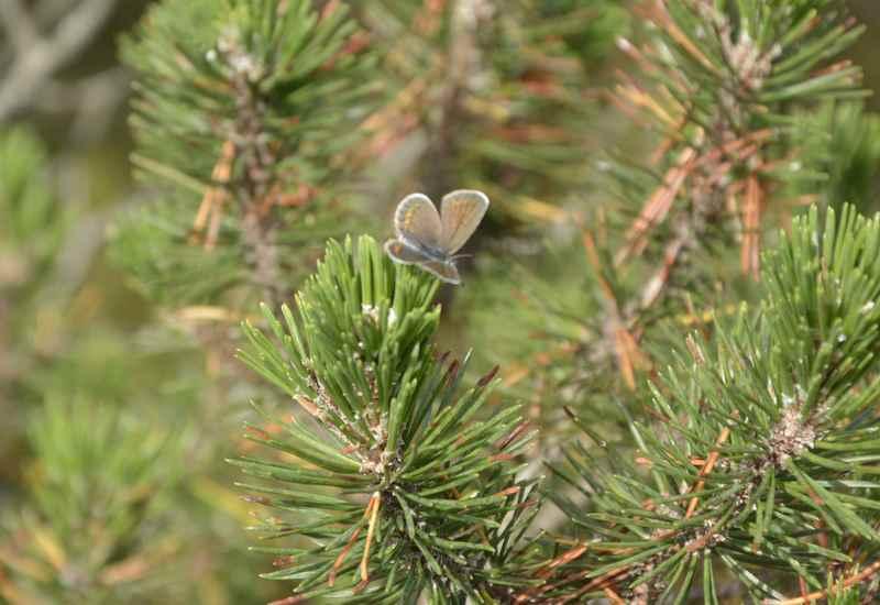 Der Große findet am Wegrand einen Schmetterling und drückt den Auslöser - erfolgreich wie man hier sieht.
