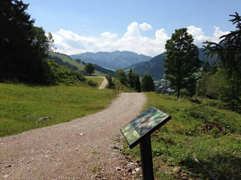 Über den Schmetterlingsweg von der Mussbachalm zurück nach Maria Alm wandern mit Kindern
