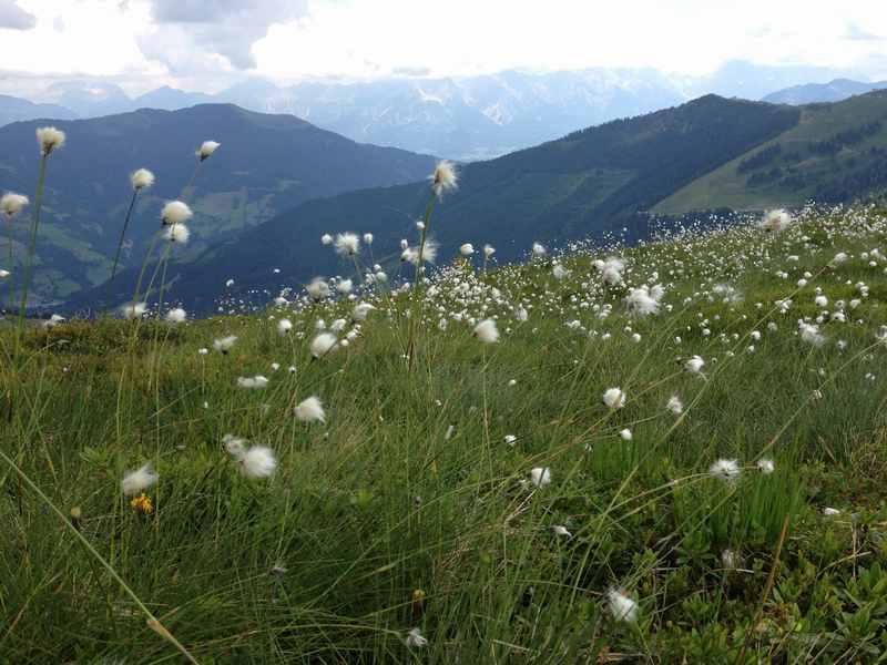 Schmittenhöhe Zell am See merken für den nächsten Familienurlaub im Salzburger Land