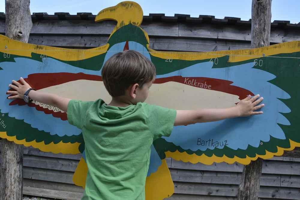 Wie groß ist die Flügelspannweite der Vögel? Die Kinder können es anhand der eigenen Köpergröße vergleichen.