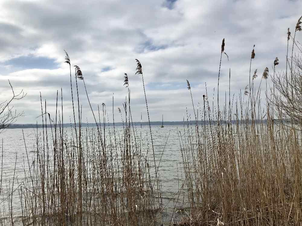 Abwechslungsreiche Uferlandschaft - mit Schilf, Wiese und Kiesstrand.