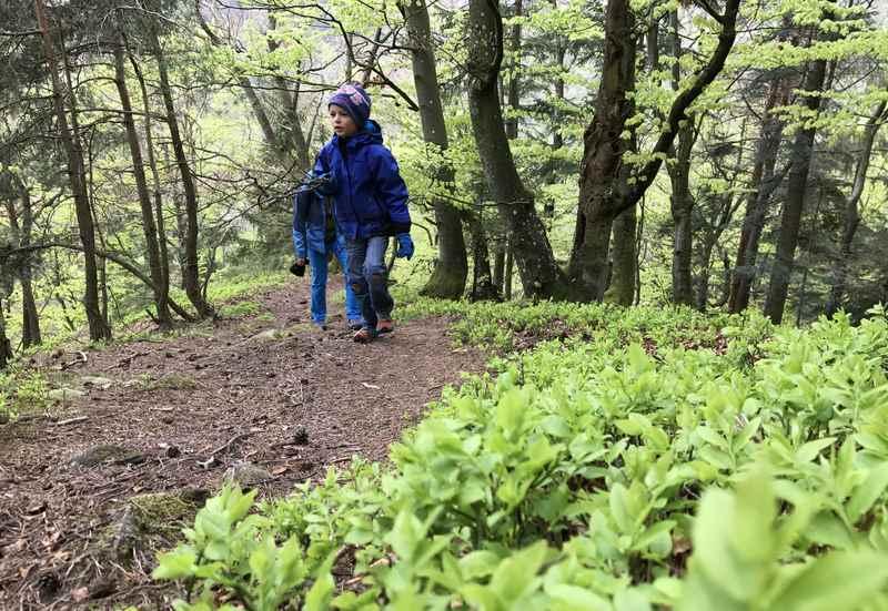 Zum Steiner Felsen wandern mit Kindern, wunderschön das frische Grün am Wanderweg