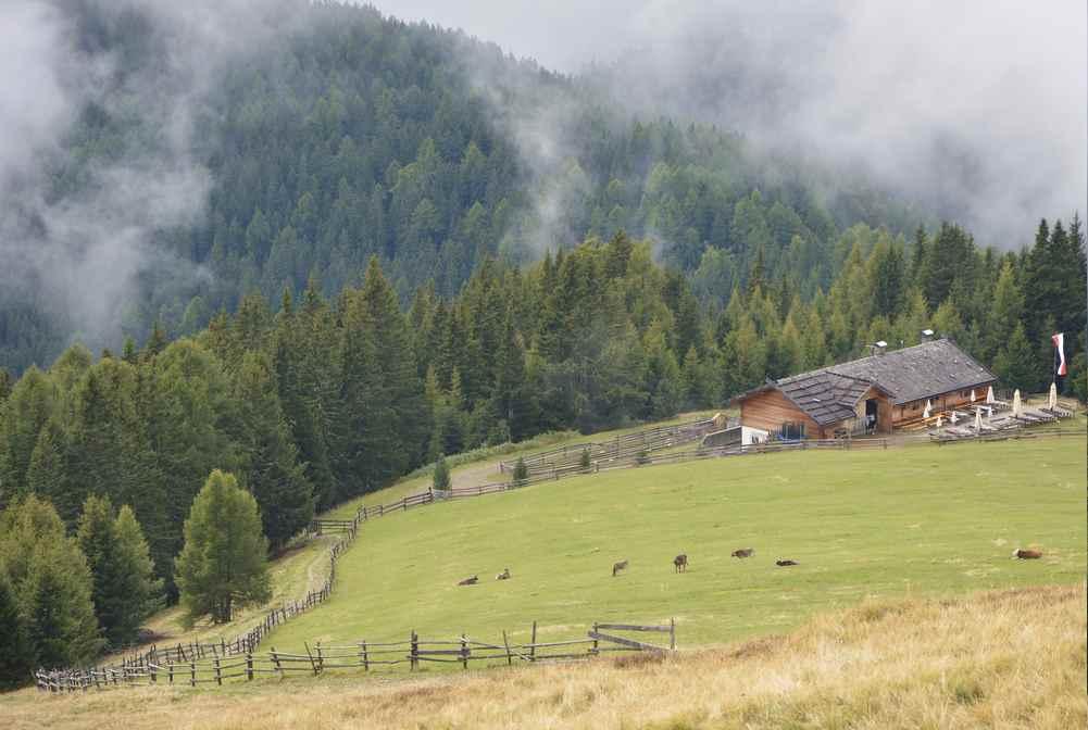 Von der Moserhütte wandern wir entlang des Weidezauns hinauf zum Klein - Gitsch