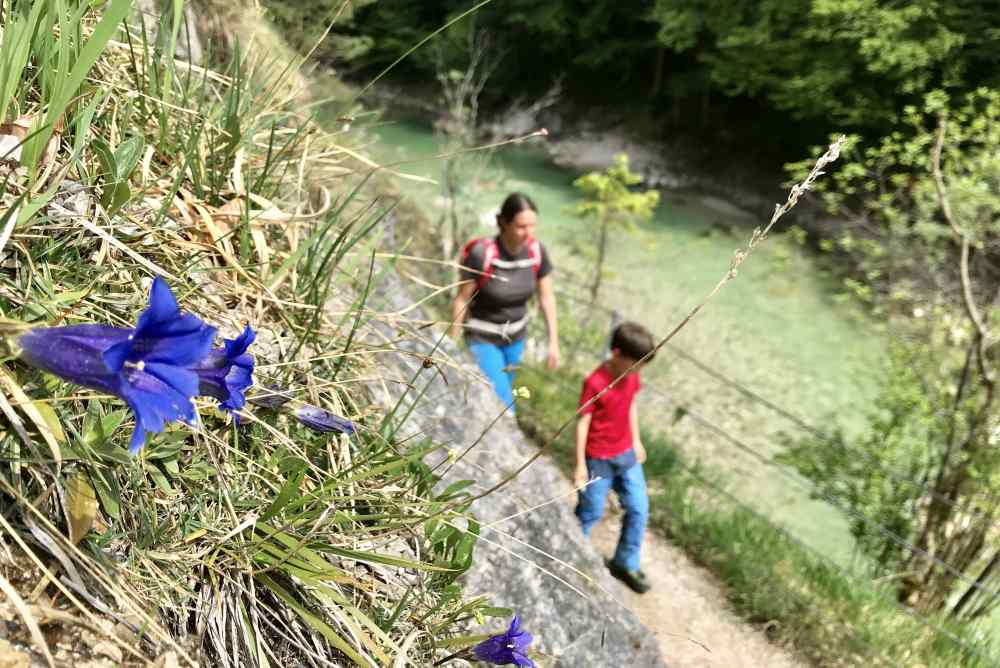 Im Frühling mit der Enzianblüte: Unsere Wanderung mit Kindern in der Tiefenbachklamm