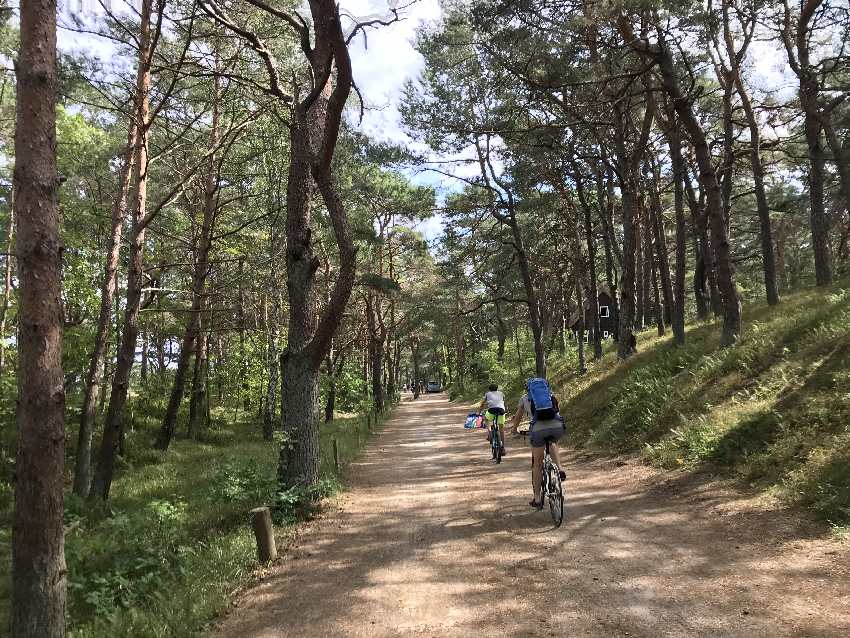 Mit dem Fahrrad an den Usedom Strand: Wunderbar durch die Kiefernwälder