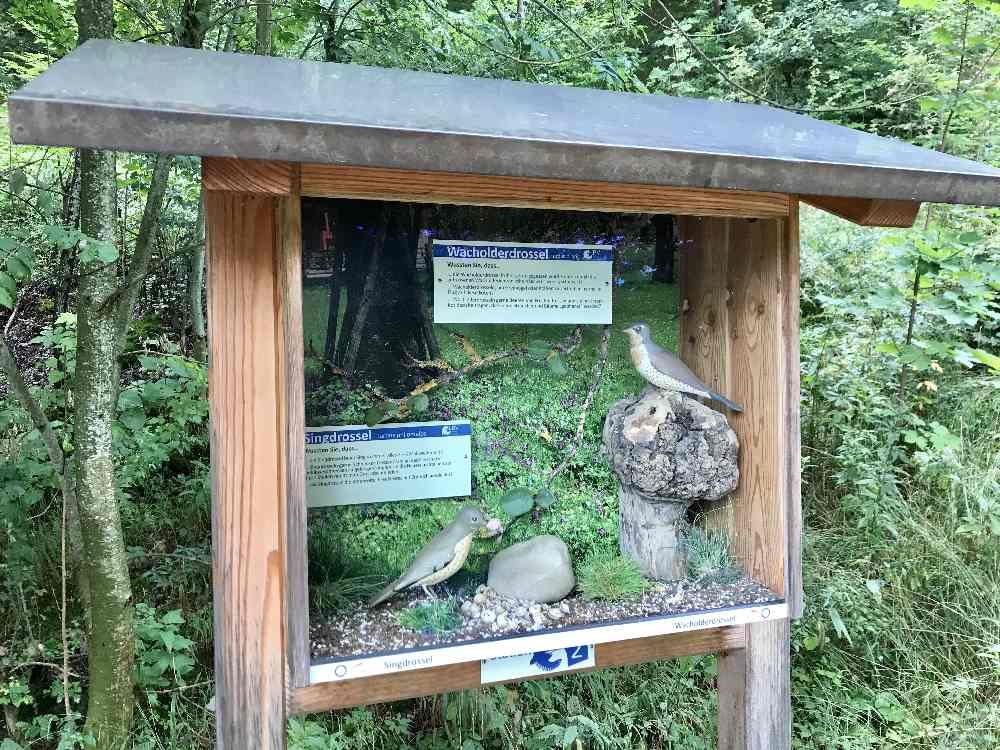Das ist eine der Stationen vom Vogellehrpfad am Alatsee mit Kindern