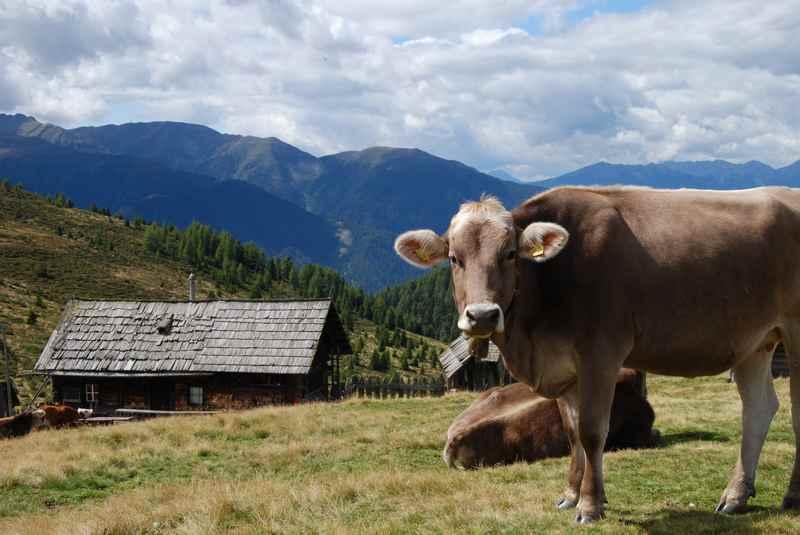 Südtirol wandern mit Kindern - hier in den Dolomiten im Grödnertal auf dem Raschötz