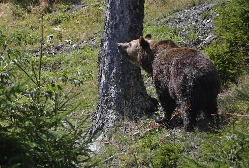 Noch größer ist die Freude, als wir den Bären im Wildpark sehen