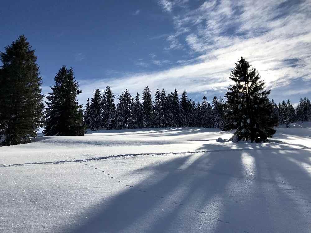 Winterwandern Oberstaufen am Hündle - je nach Lust zwischen 45 Minuten und 2 Stunden in der Winterlandschaft wandern