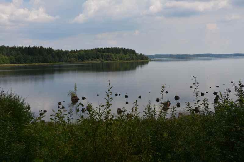 Die bayrische Au am Moldaustausee - hier sind bei Niedrigwasser noch die  Baumstümpfe zu sehen, für den See mussten Bäume gerodet werden