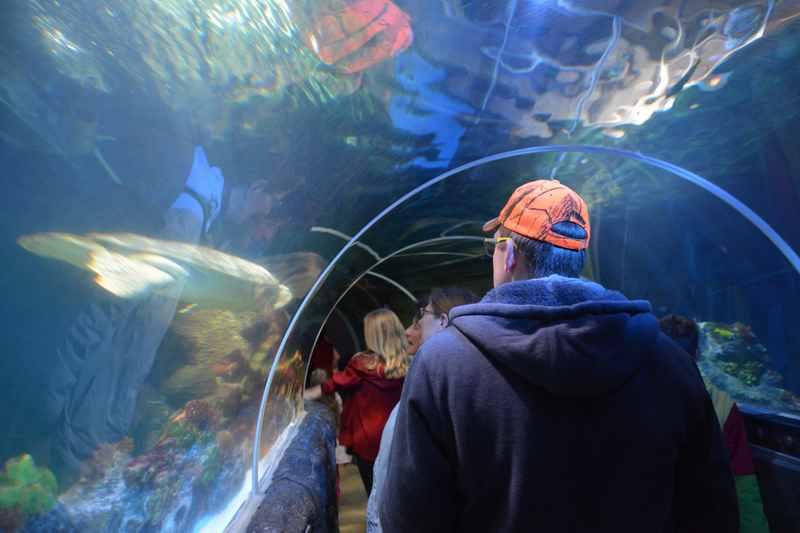Besucher gehen durch das Aquarium in Konstanz und sehen Haie und Wasserschildkröten