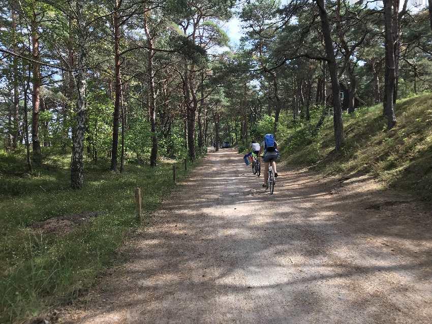 Mit dem Fahrrad geht es schnell zum Ostsee Strand - durch den idyllischen Kiefernwald