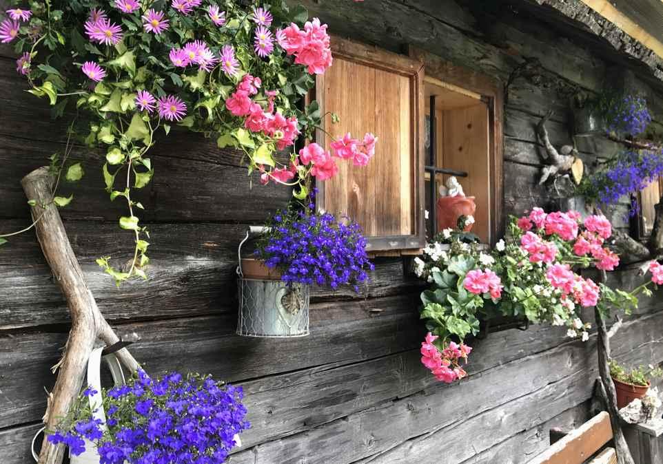 Mit vielen Blumen an der Holzwand der Hütte