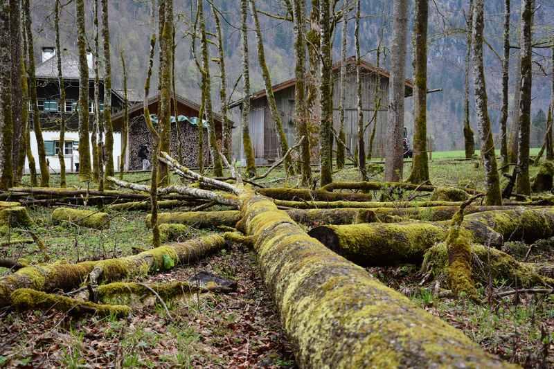Königssee wandern mit Kindern: Der St. Bartholomä Wanderweg mit den Bäumen zum Balancieren, Nationalpark Berchtesgaden hautnah für Kinder