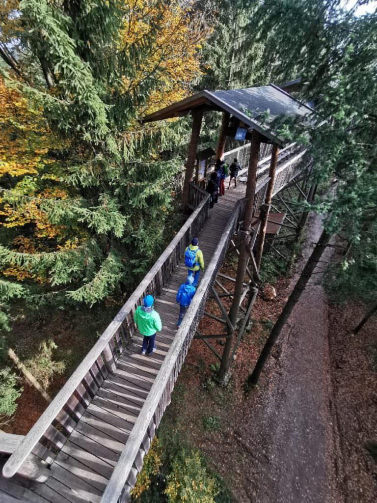 Die besten Ausflugsziele mit Kindern: Der Baumkronenweg Kopfing