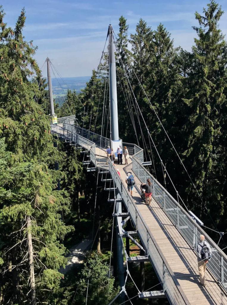 Besuch mal den Skywalk Allgäu - für uns der beste Baumwipfelpfad