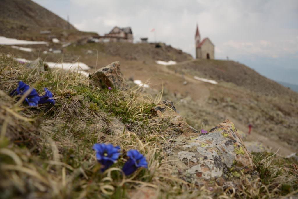 Latzfonser Kreuz - mit der Enzianblüte im Frühling