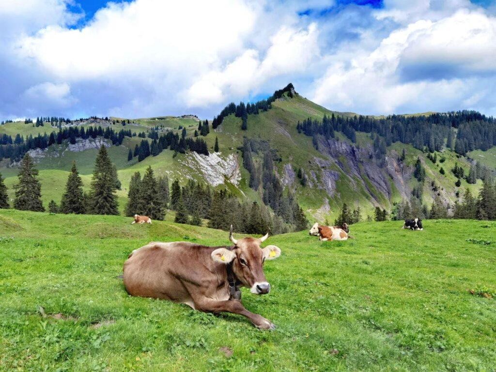 Abwechslungsreicher Tag in den Bergen in Laterns - über die weiten Almen wandern, Spielplätze & Sommerrodelbahn
