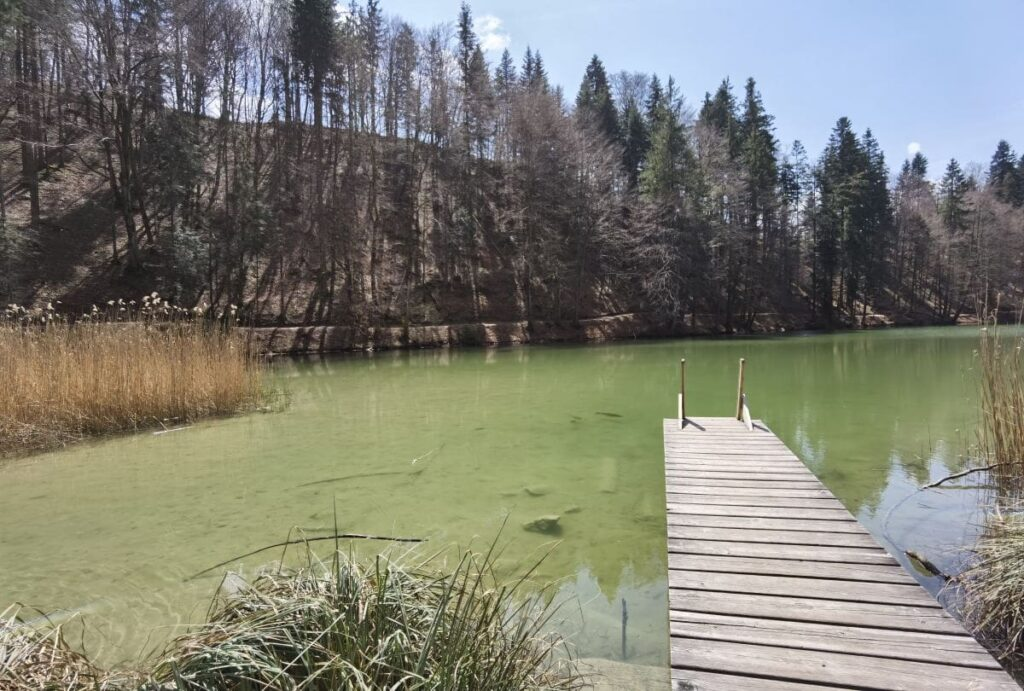 Idyllischer Bergsee im Wald: Der Berglsteiner See