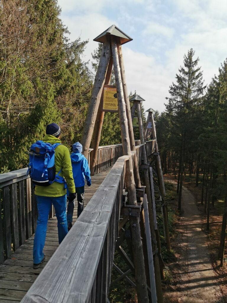 Ausflugsziele Oberösterreich - der Baumkronenweg Kopfing ist eines der Schönsten!