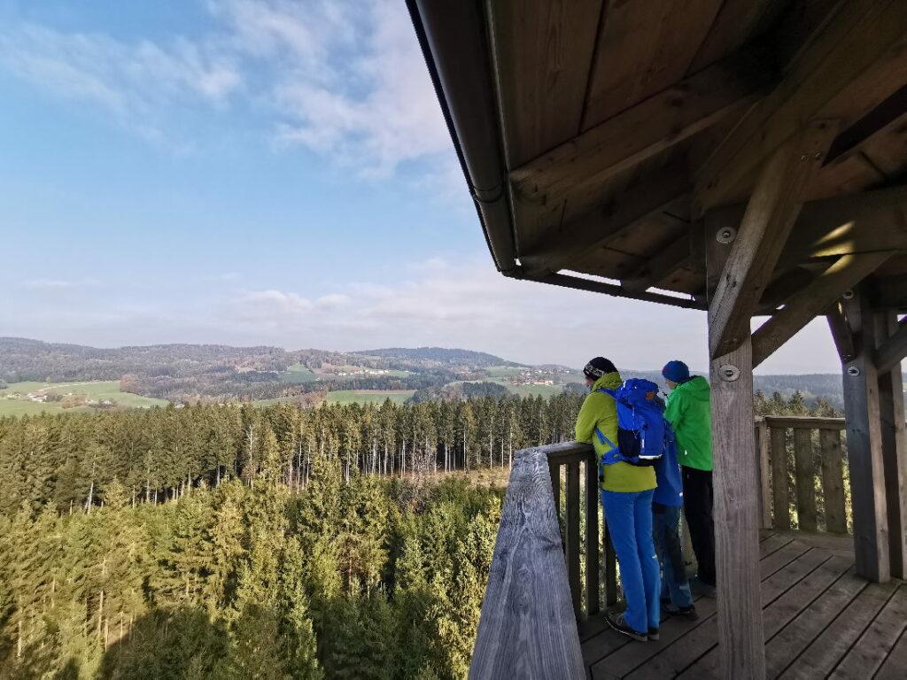 Ausflugsziele Oberösterreich: Auf dem Baumkronenweg zu den Aussichtspunkten und dann zum Spielplatz im Wald