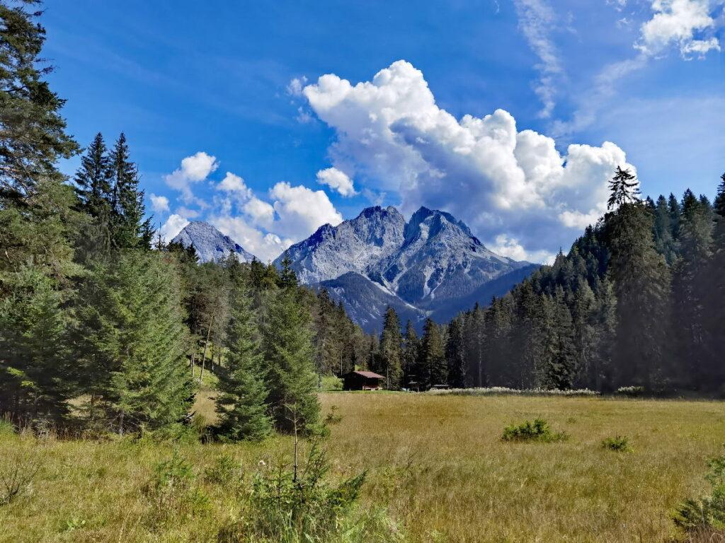 Unten das Moor und der Wald, oben die Berge