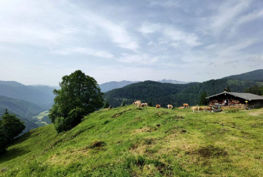 Vom Familienhotel Bayrischzell zur Neuhüttenalm wandern - Zwischenstation auf dem Seebergkopf