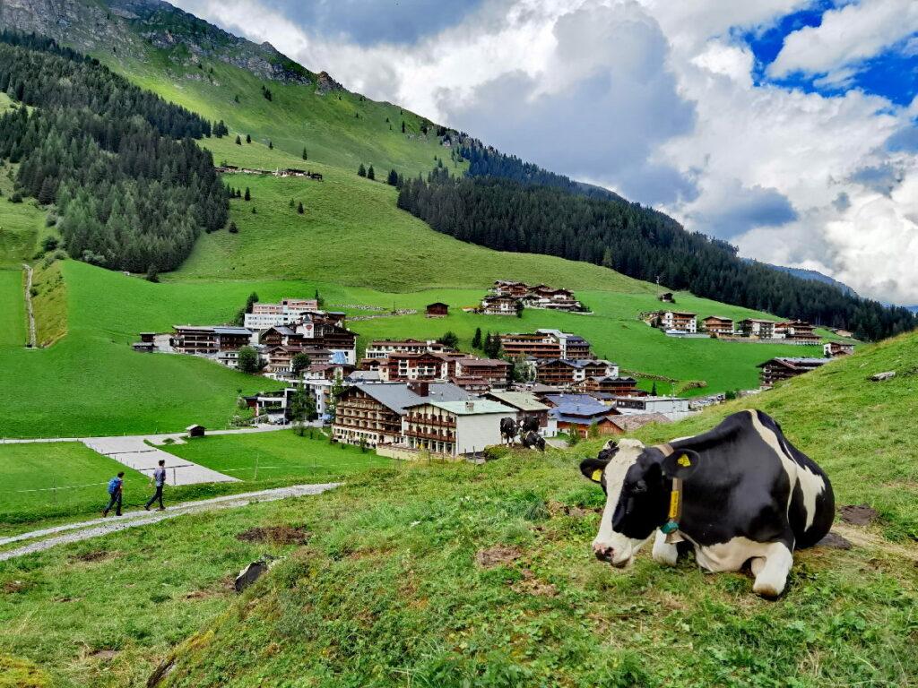 Familienurlaub Tux - der Seppelsteig führt uns vorbei an den weidenden Kühen