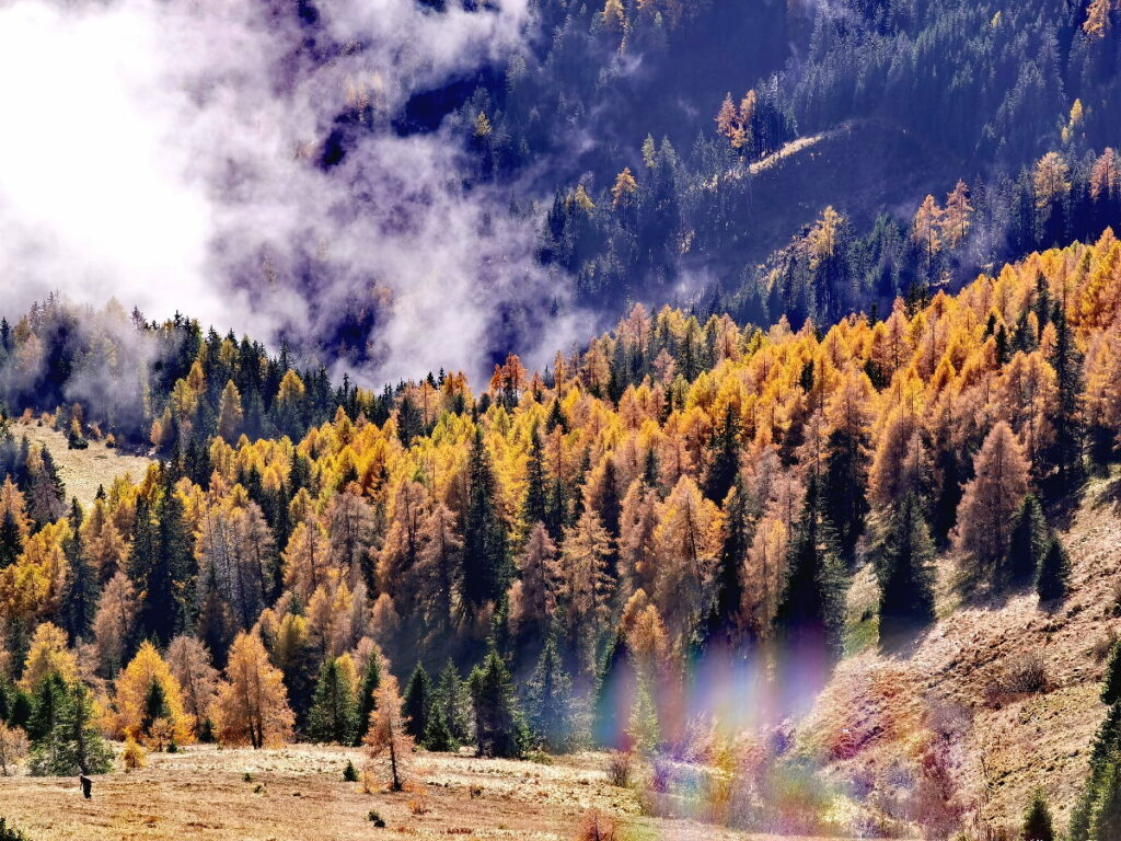 Die einmalig schöne Färbung der Lärchen auf der Granattor Wanderung
