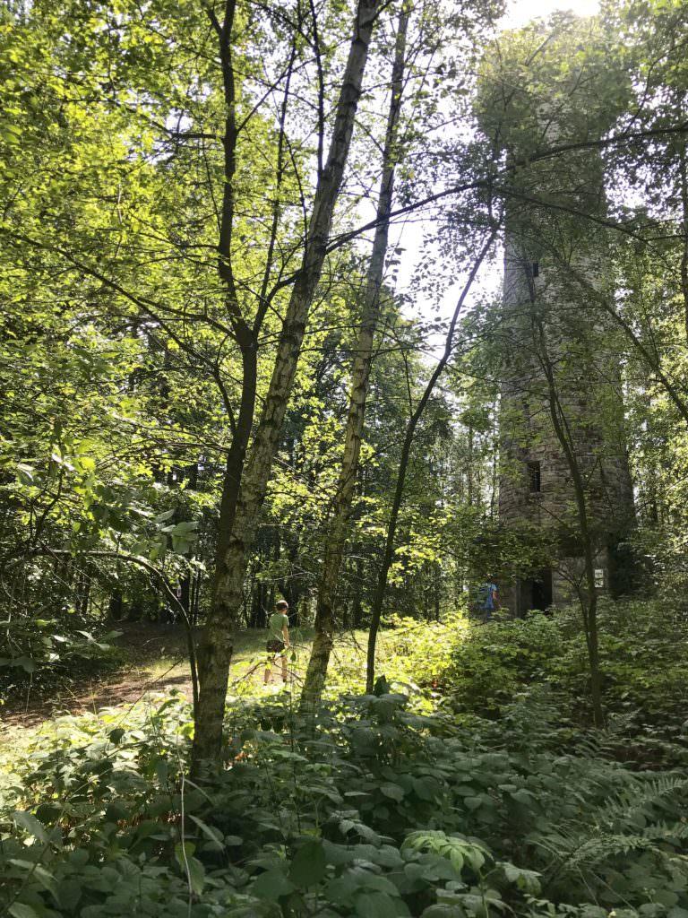 Der Lucas Cranach Turm ist gut im Wald versteckt