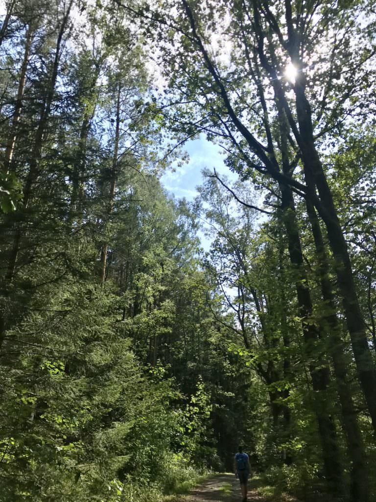 Durch den Wald zum Lucas Cranach Turm wandern