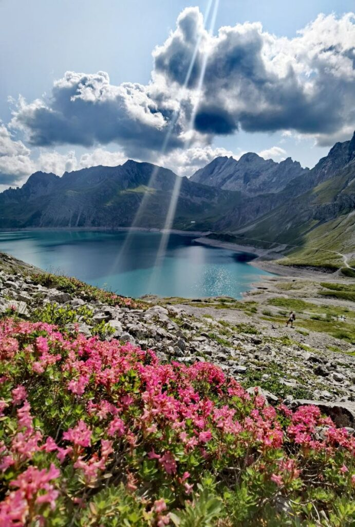 Lünersee Österreich - mit den blühenden Almrosen im August