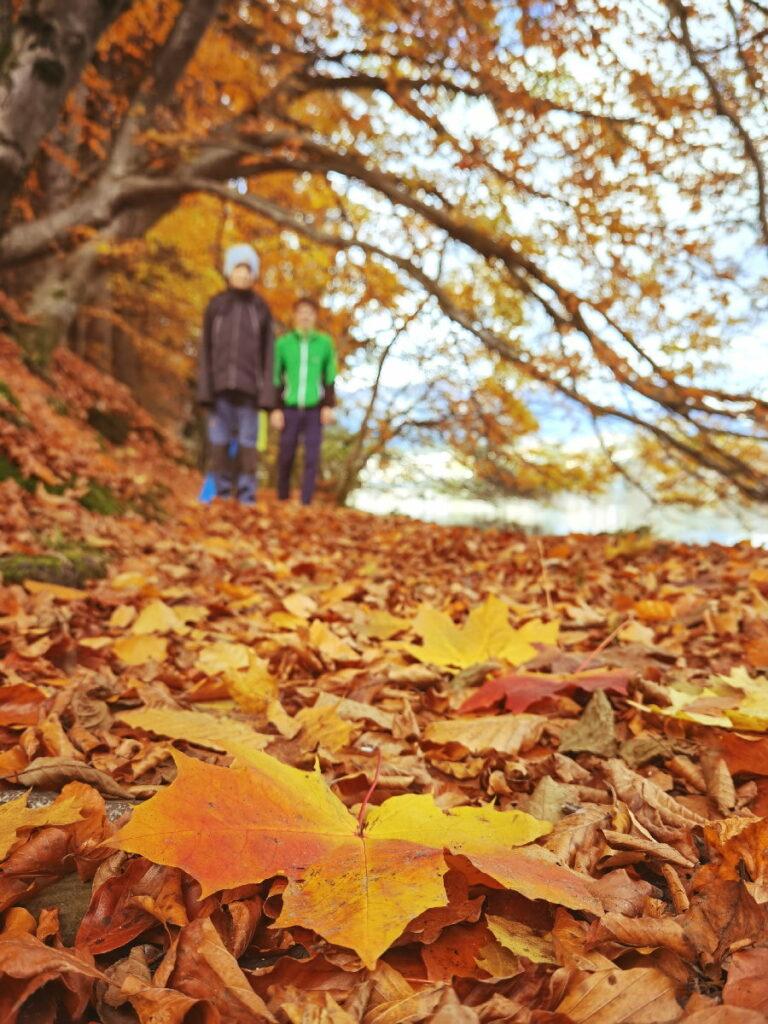 Schöner kann der Herbst nicht sein! Durch das bunte Laub am Millstättersee wandern