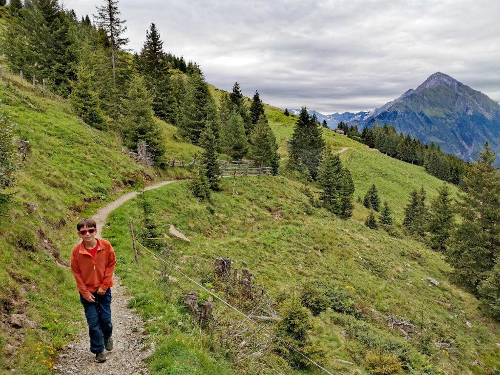 Auf dem Moorlehrpfad Finkenberg wandern