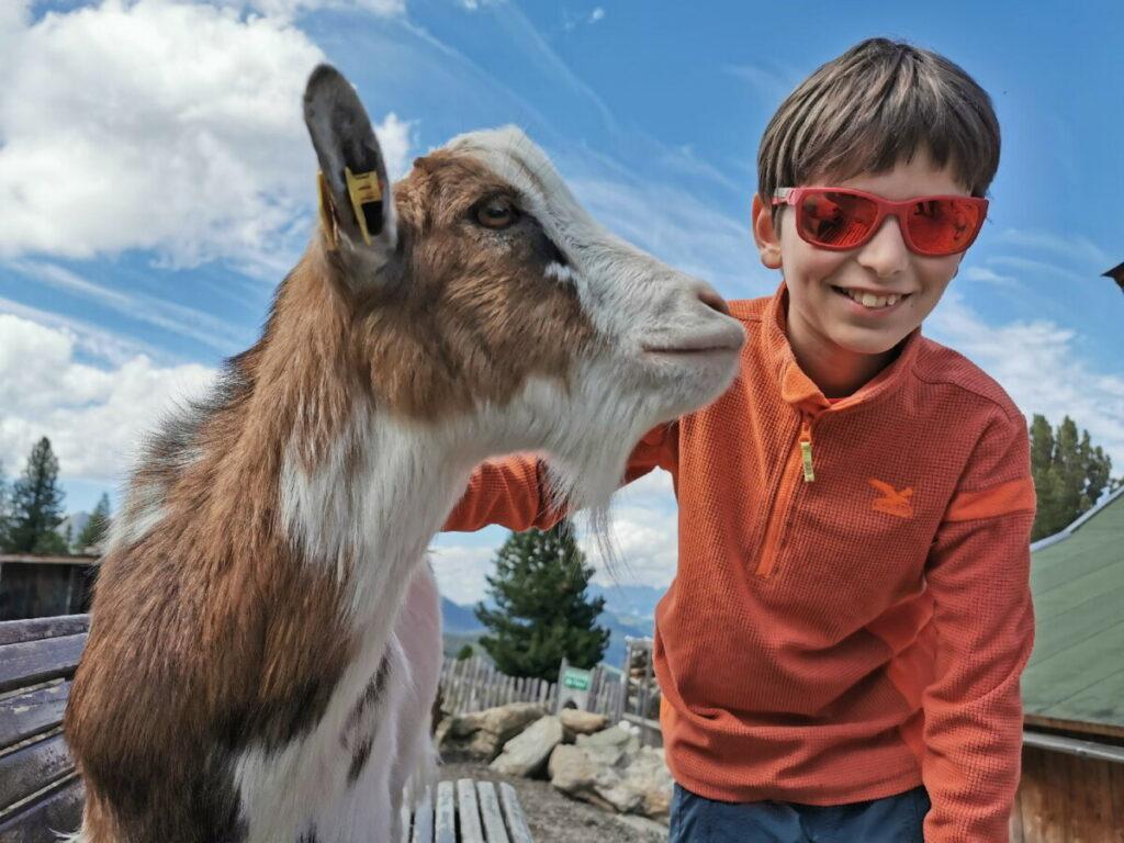 Die zutraulichen Ziegen im Murmelland Zillertal: Schöner Streichelzoo am Berg im Zillertal