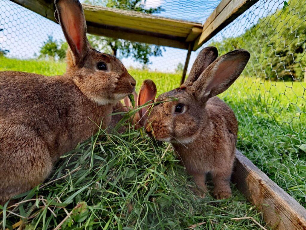 Oberlausitz Ferienwohnung auf dem Bauernhof: Jeden Morgen werden gemeinsam die Tiere  gefüttert
