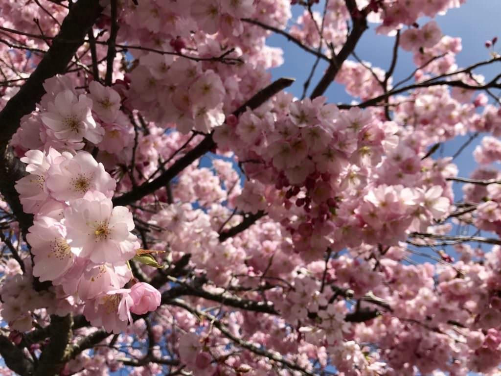 Osterurlaub mit Kindern - im Blüten - Frühling!
