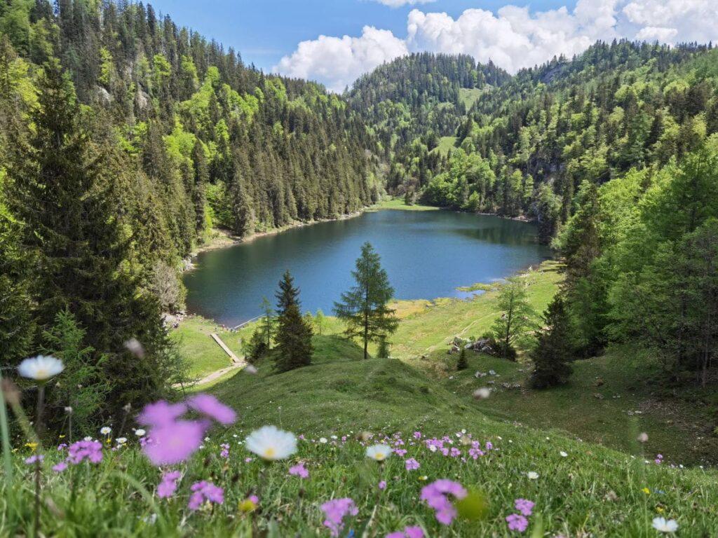Traumziel in Kössen mit Kindern - der Taubensee in den Chiemgauer Alpen