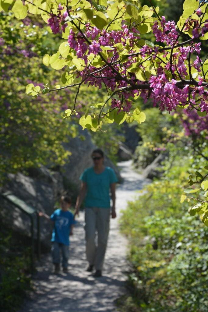Wandern mit Kindern am Gardasee - im Frühling mit voller Blütenpracht