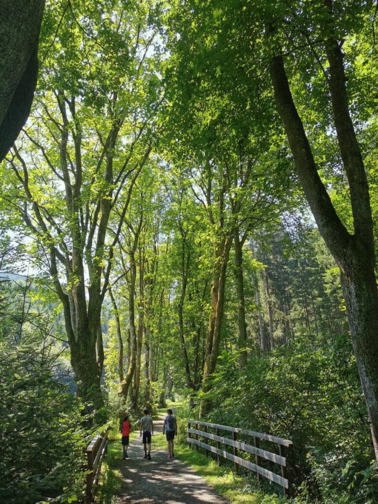 Spaziergang durch das Weitental in Bruck an der Mur